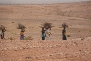 Kassab women fetching firewood