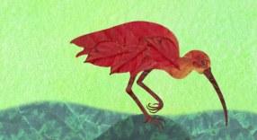 Scarlet-Ibis2
