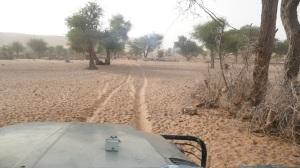 dusty trail